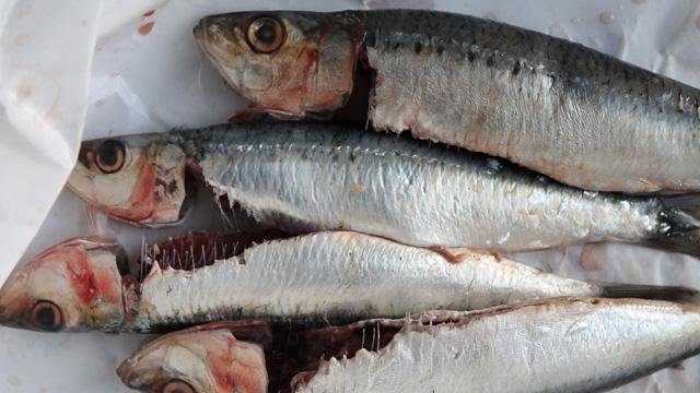 fresh-sardines-2